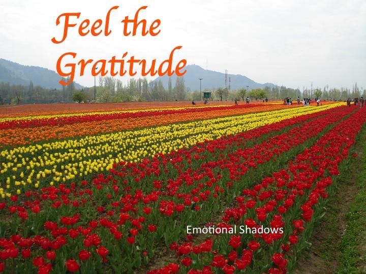 feel-the-gratitude